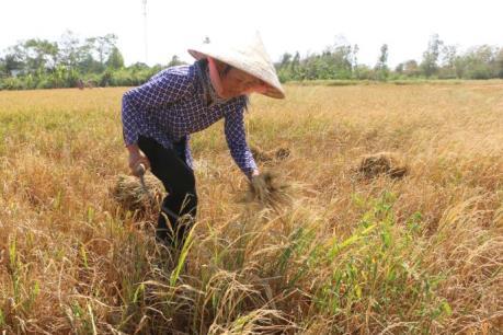 Hạn mặn ở Đồng bằng sông Cửu Long - Bài 4: Cần sớm thay đổi kỹ thuật canh tác