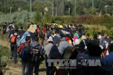 Vấn đề người di cư: Số người tới Đức xin tị nạn giảm mạnh