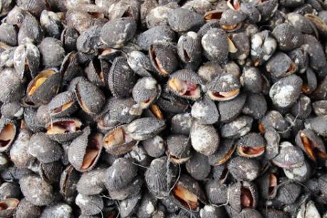 Quảng Ninh thu giữ hơn 2,4 tấn sò không rõ nguồn gốc