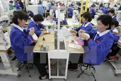 """""""Sức khỏe"""" đáng báo động của thị trường việc làm Hàn Quốc"""