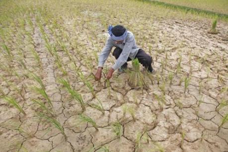 Hầu hết các tỉnh của Campuchia đối mặt với hạn hán