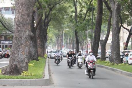 Sắp chặt hạ hàng chục cây cổ thụ làm ga metro Ba Son tại Tp. HCM