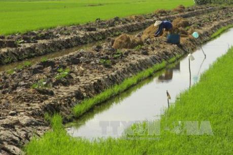 Người dân Nam Trung bộ lao đao vì khô hạn - Bài 2: Thích ứng với từng vùng