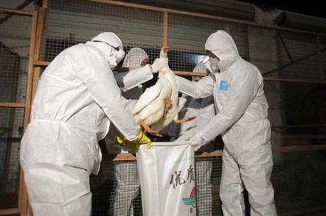 Hàn Quốc xuất hiện dịch cúm gia cầm