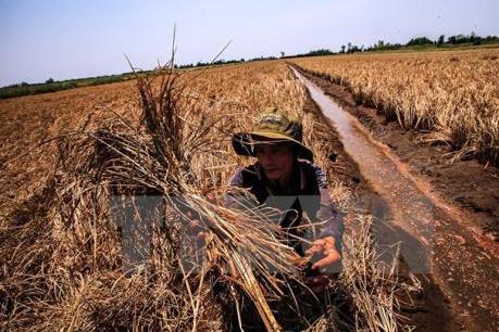 Biến đổi khí hậu: Hạn hán gây thiệt hại hơn 90 tỷ đồng tại Khánh Hòa