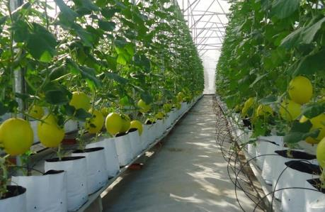 VinEco đầu tư sản xuất nông nghiệp công nghệ cao tại Hà Nam