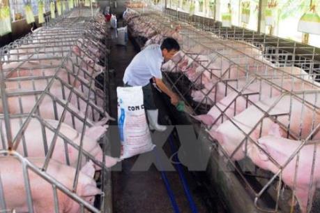 Phản hồi về vụ lợn nhiễm chất cấm tuồn vào lò mổ ở Bình Dương