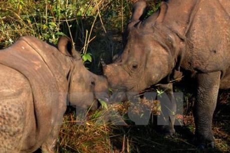 Nam Phi áp đặt lại lệnh cấm buôn bán sừng tê giác
