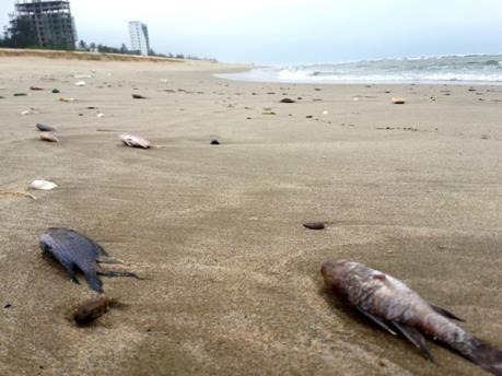 Thừa Thiên Huế công bố kết luận về nguyên nhân khiến cá chết hàng loạt