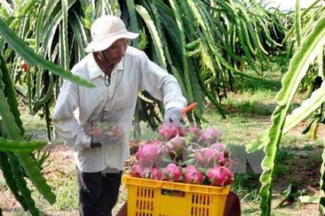 Australia xem xét nhập khẩu quả thanh long của Việt Nam