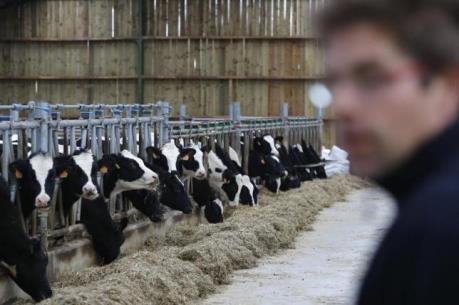 Ngành sữa đối mặt với thách thức lớn