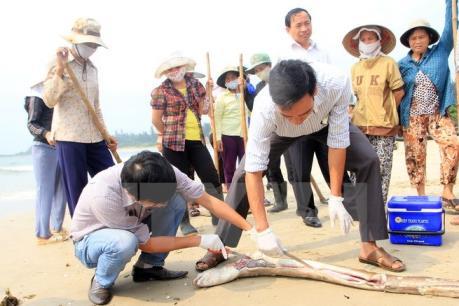 Kết quả xét nghiệm hải sản ở Hà Tĩnh sau vụ cá chết hàng loạt