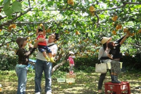 Các điểm du lịch vườn hút khách ở Vĩnh Long