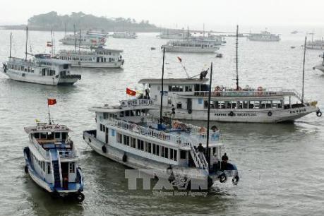 Đình chỉ hoạt động tàu du lịch trên vịnh Hạ Long của doanh nghiệp nợ đọng thuế