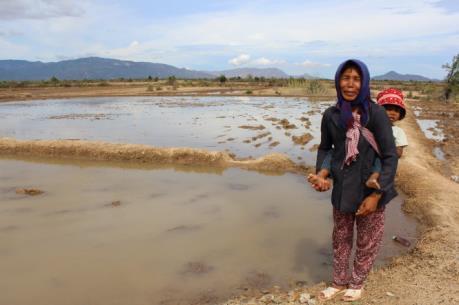 Mưa lớn làm dịu mát những núi đồi khô hạn ở Ninh Thuận
