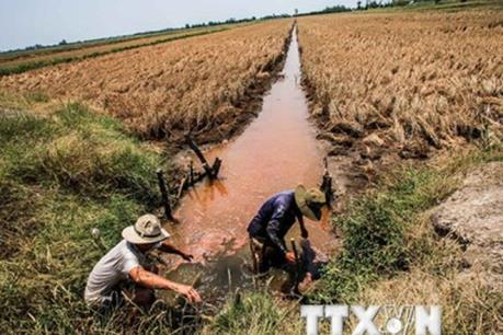 Nhật Bản hỗ trợ 2,5 triệu USD giúp Việt Nam khắc phục thiệt hại do hạn hán, ngập mặn