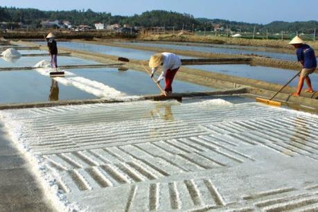 Kết luận mới nhất về các mẫu muối ở Hà Tĩnh