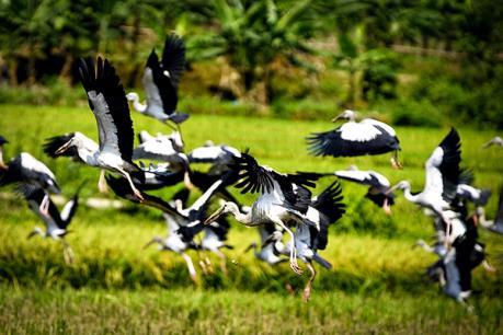 """Những điều ít biết về loài """"chim lạ"""" xuất hiện ở Bát Xát"""