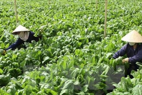 Hỗ trợ DN nông thủy sản, thực phẩm Nhật Bản - Việt Nam mở rộng thị trường