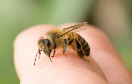 Cứu sống người bị ong vò vẽ đốt hơn 100 vết