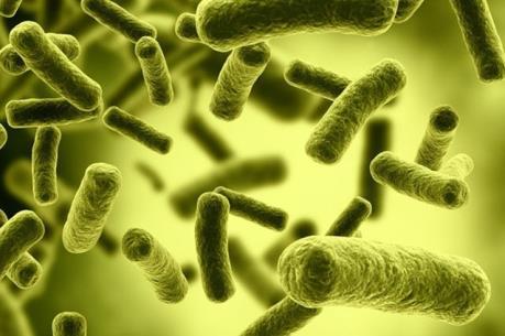 Bệnh nhân thứ 2 nhiễm siêu vi khuẩn kháng mọi kháng sinh tại Mỹ