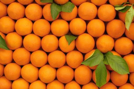 Brazil: Sản lượng và xuất khẩu nước cam ép có thể ở mức thấp nhất trong 26 năm