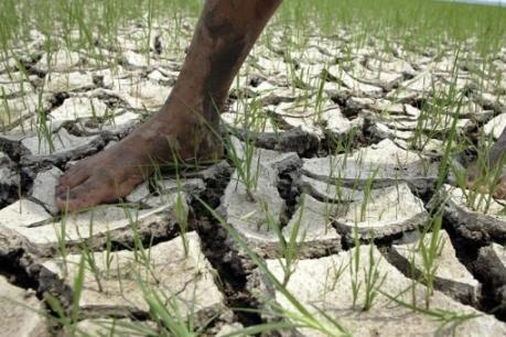 El Nino gây ra khô hạn nặng nề nhất cho Cuba trong 115 năm