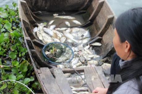 Cá chết bất thường trên tuyến sông Mỹ Thanh ở Sóc Trăng