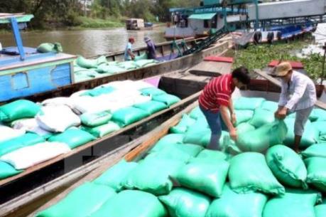 Thị trường lúa gạo trầm lắng
