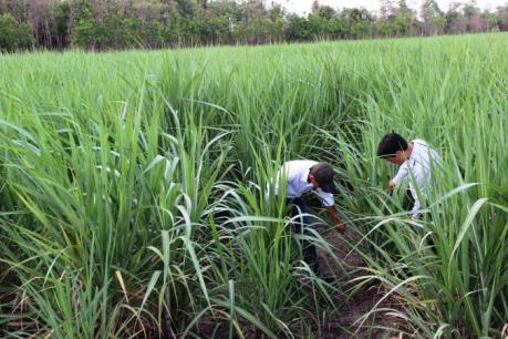 Rà soát lại quy hoạch vùng nguyên liệu cho nhà máy mía đường