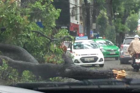 Cây đổ la liệt trong bão số 1 tại Hà Nội