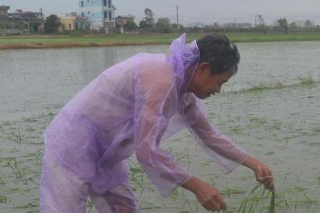 Ảnh hưởng của bão số 1: Sử dụng mọi biện pháp giảm thiểu thiệt hại nông nghiệp