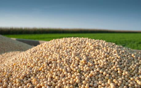 Nông sản tuần qua: Đậu tương và ngô tăng, lúa mì giảm