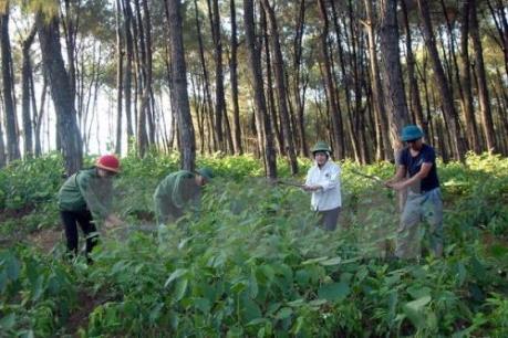 Diện tích trồng rừng giảm gần 9% do mưa lũ