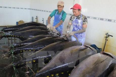 Xuất khẩu cá biển có thể đạt 8 tỷ USD