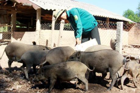Sắp diễn ra Triển lãm quốc tế ngành chăn nuôi