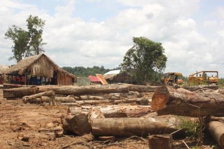 Bình Phước đình chỉ dự án chăn nuôi kết hợp trồng rừng tại huyện Bù Đốp