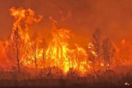 Xuất hiện đám cháy rừng mới ở gần biên giới Pháp, Tây Ban Nha