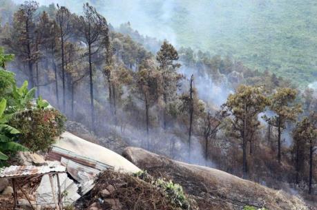 Cháy lớn tại rừng đặc dụng Nam Hải Vân, Đà Nẵng