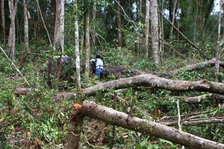 Quản lý rừng Tây Nguyên: Công an và nhà báo phối hợp bắt vận chuyển gỗ lậu