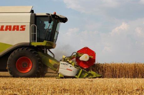 Đức: Sản lượng lúa mỳ trong niên vụ 2016-2017 sụt giảm 8,8%