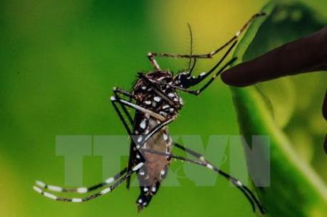 Một người Đài Loan (Trung Quốc) mắc Zika sau khi trở về từ Việt Nam