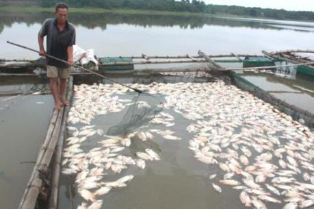 Khẩn trương xác định nguyên nhân cá nuôi lồng chết hàng loạt tại xã đảo Nghi Sơn