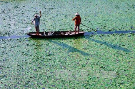 Kiên Giang chủ động phòng chống khô hạn xâm nhập mặn