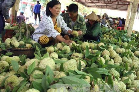 Thu hút nguồn lực cho nông nghiệp sạch