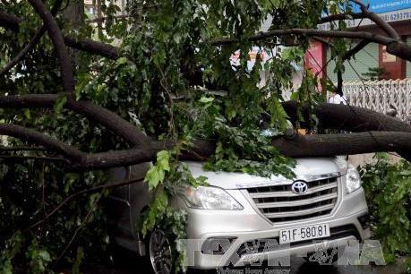 Thành phố Hồ Chí Minh tiếp tục mưa lớn, nhiều cây xanh ngã đổ