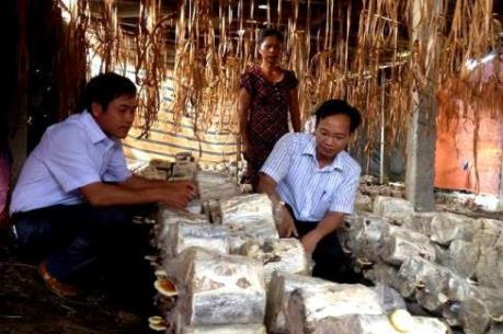 Xây dựng và phát triển thương hiệu Nấm Bắc Giang