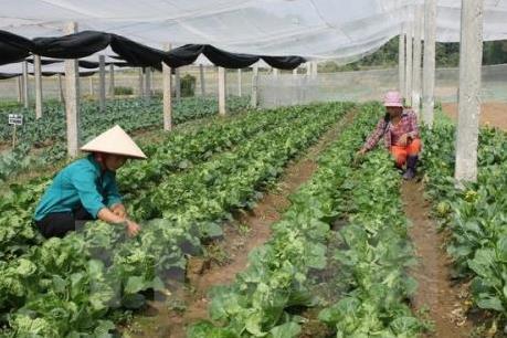 Doanh nghiệp nông nghiệp kêu khó vì thủ tục hành chính
