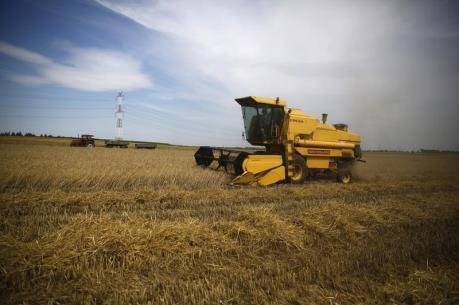 Mưa lớn có thể làm giảm sản lượng lúa mì của Australia