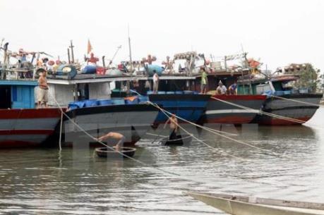 Thừa Thiên - Huế chi trả tiền tạm cấp bồi thường thiệt hại sự cố môi trường biển